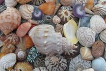 New Zealand Beaches / Shells and Other Treasures