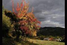 I užitečné rostliny umí být na podzim krásné / Nejen javory a škumpy dělají krásný podzim. Objevte krásu a kouzlo podzimně zabarvených užitečných jedlých stromů, keřů a rostlin.