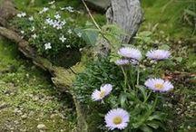 Mrtvé dřevo plné života / Pařezy, větve, dřevěné klády – pokud zůstanou v lese, poskytují útočiště mnoha živočichům a živiny rostlinám. Stejnou službu vám prokážou i v zahradě, podívejte se, jak je mrtvé dřevo vlastně krásné.