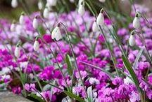 Záplava jarních květů / Jedna sněženka pro mne jaro nedělá, potřebuji spíš moře květů. Zde jsou moje jarní inspirace.