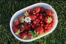 Květen a červen ve vysněné zahradě / Pojďte se podívat, jak se máme na zahradě v těch nejrozkvetlejších krásných jarních měsících...