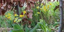 Březen a duben ve vysněné zahradě / Podívejte se, jak se nám po zimě probírá naše zahrada