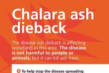 {Nature} Ash Dieback - Woodland Signs (Forestry Commission/DEFRA) / Ash Dieback - Woodland Signs, from the Forestry Commission/DEFRA