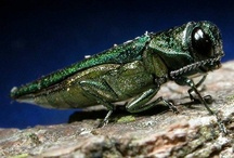 {Nature} Tree Pests / Tree pest insects etc.