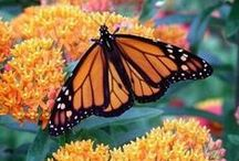 Plants that work in ~ butterfly spaces