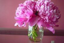 Flowers!! / by Lisa S