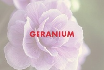 Geranium / by Beautycounter