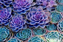 Cactus & Succulents / by Anne Sewell