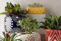 succulents, cacti and other prickly pairs...