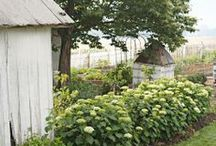 The Garden / Garden Inspiration for all Green Fingered People...