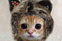 cats / Felines