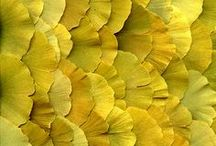 texture nature