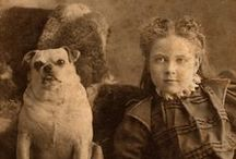 vintage dog photo's