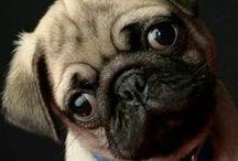 Fotografía de Mascotas / Llévate el mejor recuerdo de tu mascota. Contactame ahora al 3172731938 - 3007555676
