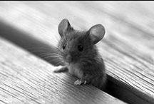 Sweet & Funny Animal Pics!!! / by Sondra S.