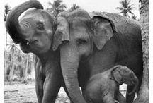 Zwierzęta / Animals