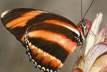 MOTYLE  i ćmy / Butterflies and Moths / бабочки