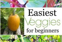 Gardening Ideas / Ideas Tips Suggestions  and Inspiration for all types of Gardening Projects