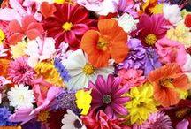 Flowers | Mixed Colours / Flowers | Mixed Colours