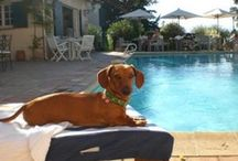 Pet-Friendly Boutique Hotels / We think that pets are part of the family and respect your decision to bring your little friend with you, also on vacation. Enjoy you all your holidays in Spain and relax!