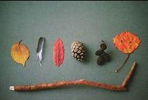 Falling for Fall - ChecklistMom
