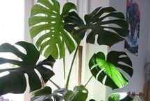 Plants - ChecklistMom