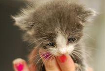kitties and sweeties :) / Cute xd