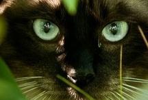 Cats / by Hilde De Winne