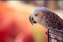parrots <3