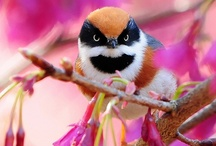 beautiful birds .___.