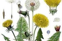 botanical identity