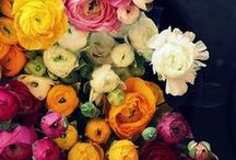 Florals / The serene beauty of florals