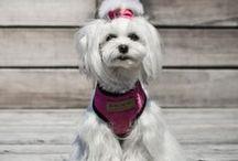 Harnais Candy rose pour chien