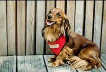 Harnais Candy rouge pour chien