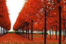 Naturaleza / Me gusta el sonido de la naturaleza y sus bellos paisajes.