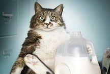 Fatimals / Fat animals need love too...
