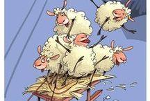 doux le mouton