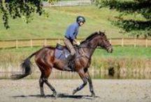 Schooling & Riding tips / Make the most out of your schooling sessions and get the most out of your horse at all levels!