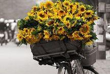 flowers and gardnenigs
