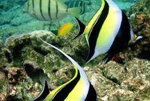 Poissons/mammifères/dans l'eau... / Fascinant ces créature.