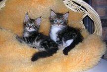 chats et félins