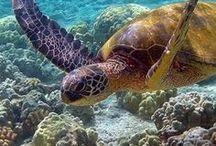 tortues/tortues de mer