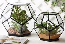 Plants & Knick-Knacks