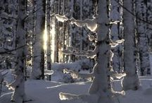 Winter / Beautiful scenes and landscapes covered with snow
