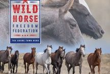 Wild Horse Calendars for Wild Horse Freedom Federation / Each year since 2009 I have produced a calendar for the Cloud Foundation, and 50% of proceeds go to benefit the Cloud Foundation. This year the Calendar benefits Wild Horse Freedom Federation.