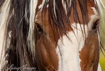 The Eye of the Horse / Window to the soul of the horse