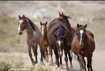 Wild Horse Families / The two most important things to wild horses are their families, and their freedom.