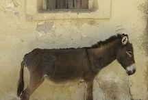 donkey.demi's.love