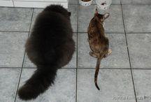 Dolcegattina / Nasze kociaki
