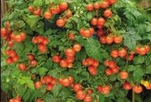 HERBS & VEGETABLES / Herbs & Vegetables
